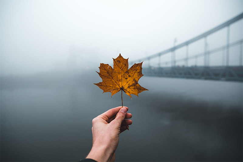 Leaf and Bridge